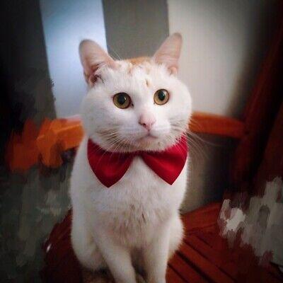 2PCS Dog Puppy Cat Necktie Bow Tie Small Dog Pet Clothes Decor Bowknot 2