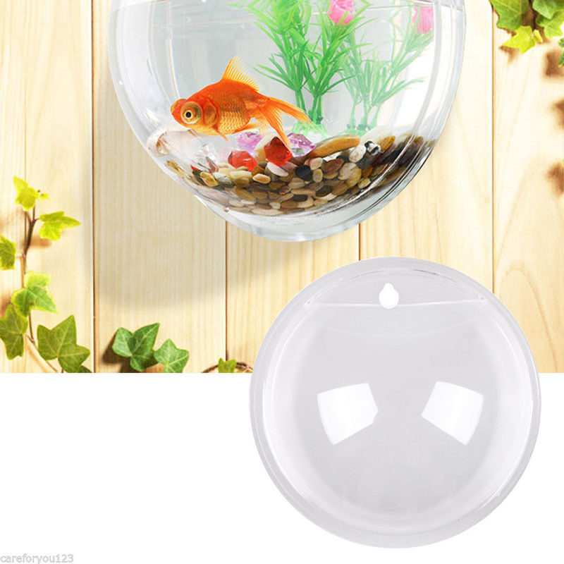 Acrylic wall mount hanging fish bowl aquarium tank beta for Acrylic fish bowl