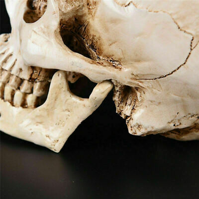 Realistic Retro Human Skull Replica 1:1 Resin Model Medical Art Teach Life Size 10