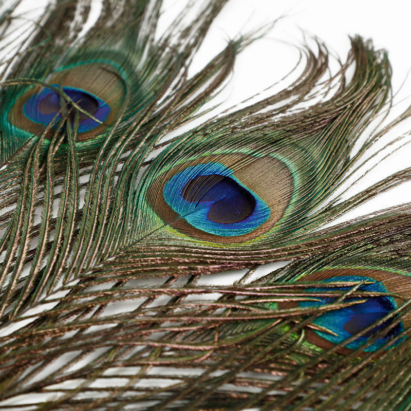 FD3892 Real Natural Peacock Tail Eyes Feathers Home Decor 8-12 Inches ~10PCs~ ♫