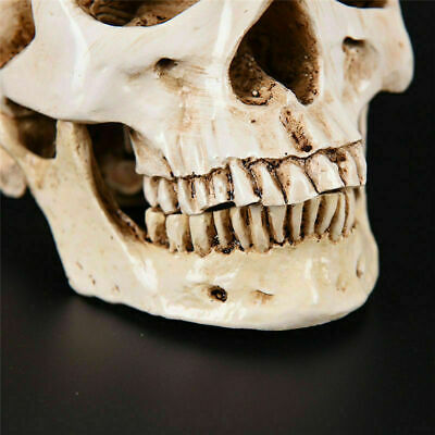 Realistic Retro Human Skull Replica 1:1 Resin Model Medical Art Teach Life Size 8