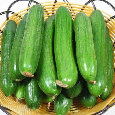 100Pcs Straight Cucumber Seeds Finest Fruit Vegetable Plant Home Garden Seeds 6