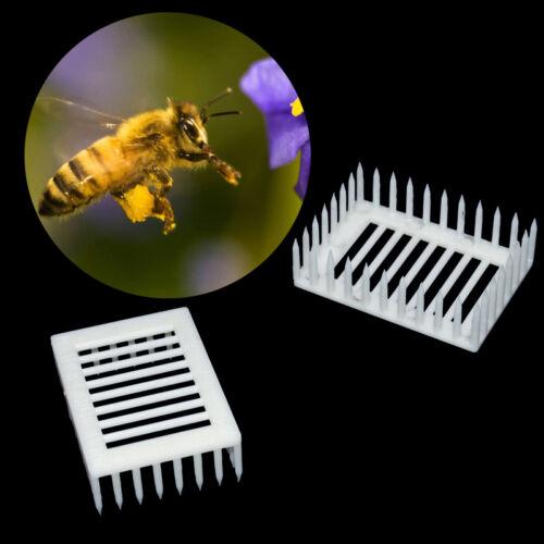 10x Bienenzucht Aufzucht Cup Kit Bienenkönigin-Käfige Imker Ausrüstung Werkzeug