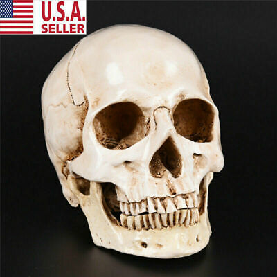 Realistic Retro Human Skull Replica 1:1 Resin Model Medical Art Teach Life Size 2