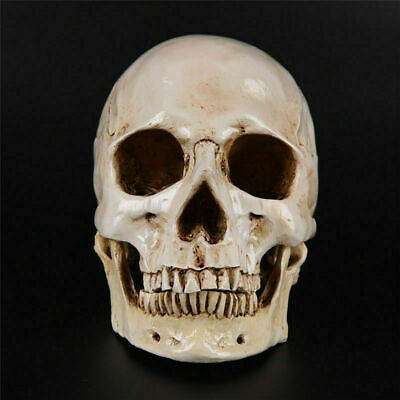 Realistic Retro Human Skull Replica 1:1 Resin Model Medical Art Teach Life Size 5