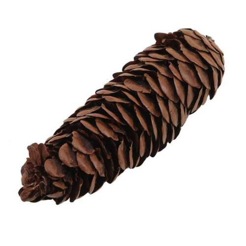 Decorative Natural Pine Cone Dried Pinecones DIY Home Vase Decoration D 8