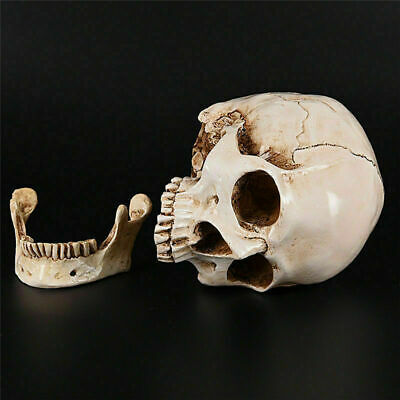 Realistic Retro Human Skull Replica 1:1 Resin Model Medical Art Teach Life Size 9