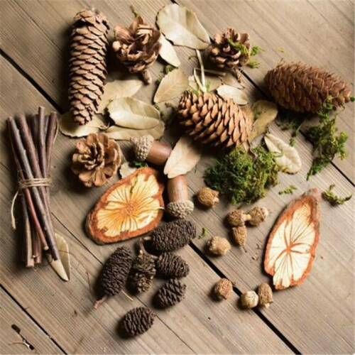 Decorative Natural Pine Cone Dried Pinecones DIY Home Vase Decoration D 3