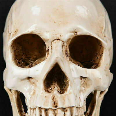 Realistic Retro Human Skull Replica 1:1 Resin Model Medical Art Teach Life Size 7