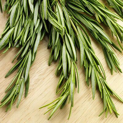 400pcs Rosemary Seeds (Rosmarinus officinalis)  Heirloom Herb Seed Gardern Decor 6