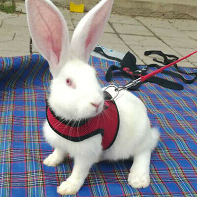 Large Black/Red Adjustable Soft Harness with Elastic Leash for Rabbit Bunny 2
