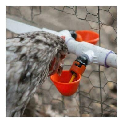20pcs Poultry Water Drinking Cups Waterer Chicken Hen Plastic Automatic Drinker 2
