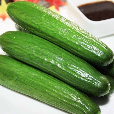 100Pcs Straight Cucumber Seeds Finest Fruit Vegetable Plant Home Garden Seeds 2