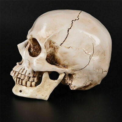 Realistic Retro Human Skull Replica 1:1 Resin Model Medical Art Teach Life Size 11