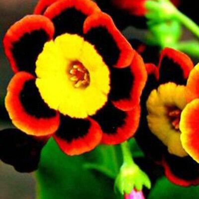 Annual Blume Saat Zuhause Garten Dekor Schönheit 100x Tri-color Selten Petunie
