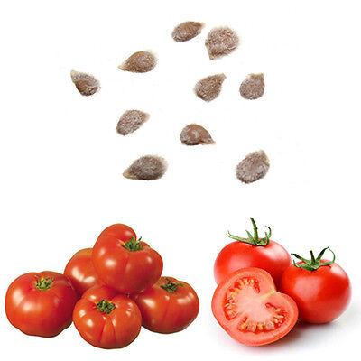 GIGANTE del tomate * ÁRBOL * * 10 semillas semillas de tomate fresco 4