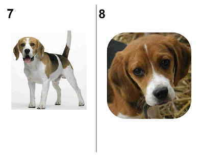 120 beagle dog pet return address labels 4 99 picclick