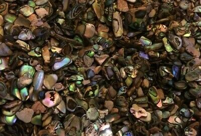 Quantity of Satin Tumbled NZ Paua Shell Pieces -  Small 3