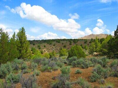 "Rare 10 Acre Elko Nevada Ranch ""Wildhorse Canyon"" W Trees! Cash Sale No Reserve! 2"