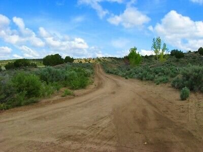 "Rare 10 Acre Elko Nevada Ranch ""Wildhorse Canyon"" W Trees! Cash Sale No Reserve! 4"