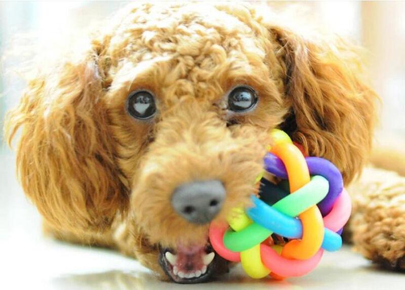 Puppy Pet Dog Colorful Dental Teething Healthy Teeth Chew Training Play Ball Toy 3