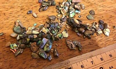 Quantity of Satin Tumbled NZ Paua Shell Pieces -  Small 2