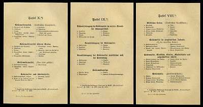 3 original Farb-Lithographien 1898 Lehrtafeln Gynäkologie Gynäkologe