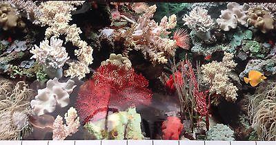 poster fond d aquarium decor double face  eau de mer 40 x 30 cm