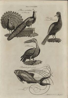 1797 ENCYCLOPEDIA BRITANNICA: Complete 18 Volume 3rd Edition - E23