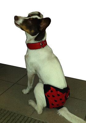 * Schutzhöschen * Hundehöschen * Läufigkeitshöschen *Schutzhose für Hunde *CRAZY 5