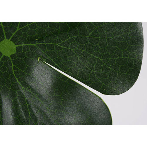 Aquarium Plant Seeds Fish Tank Aquatic Water Lotus Leaf Foreground Easy Plants