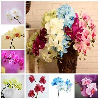 100 Phalaenopsis Seeds Bonsai Butterfly  Beautiful Bonsai Flower Seed S076 3
