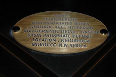 Eutrichiurides Fossil Fish Bones With Teeth In Matrix On Stand - Morocco #eu5