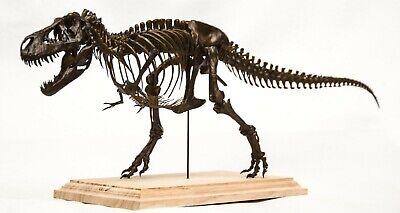 1/20 Tyrannosaurus Rex Trix Skeleton Model T-Rex Dinosaur Collector Toy 3D Print 3