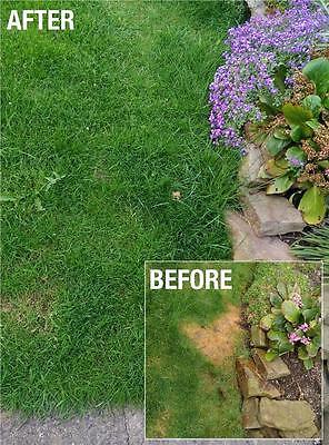 Envii Neuturine – Eliminate Dog Urine From Grass & Repair Lawn Burn - 12 Tablets 4