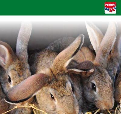 Mangime Per Conigli Di Tutte Le Razze, Coniglio Nano, Petrini In Pellet Kg.25 4