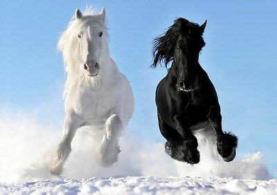 Horse 7 Black Animal Nuture Beautiful Picture Love Poster Gallop Field Photo
