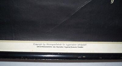 Rollkarte Lehrkarte Darmparasiten M.R. signiert Hygiene Museum Dresden deko (9 7