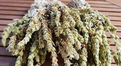 Griechischer Bergtee Sideritis Scardica Bio | 180g | Ernte 19 | Premium Qualität 2
