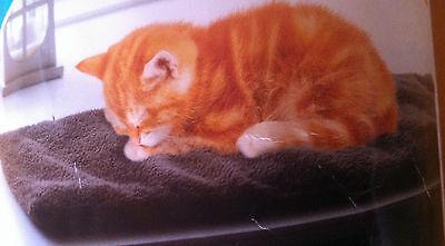 Katzen Fensterbankpolster 60x26x2 cm flauschig  Rutschsicher Grau 2