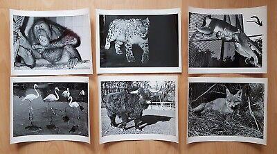 22 x Tier Fotografien Zoo DRESDEN um 1960/70 Umfeld Dr.Ullrich ( F16741
