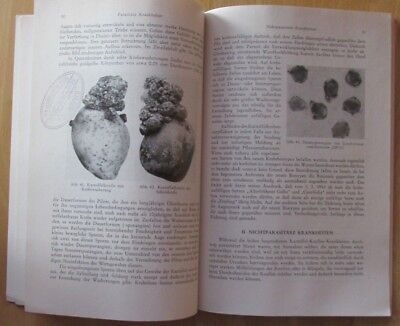 Buch Krankheiten der Kartoffel-Knollen Fäule Schorf Frost Schäden Bekämpfung