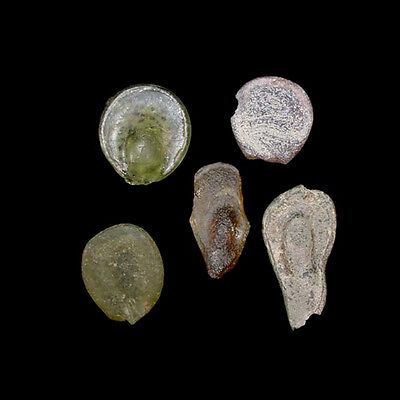 A group of 5 (five) early Islamic glass vessel stamps. 08539 2