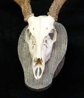 0e376ab6f90 ... Hand Made Deer European Skull Mount Wall Pedestal Barn wood Hand  painted plaque 3