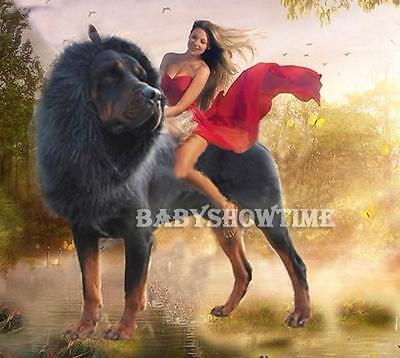 Pet Costume Lion Mane Wig Hair for Large Dog Halloween Clothes Fancy Dress up BΚ 4