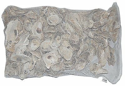 Japanische Austernschalen Muschelschalen KH pH Karbonathärte 2 kg