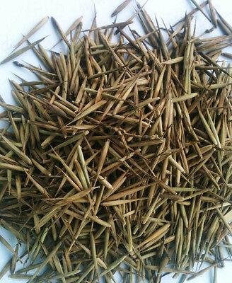 60 Chin Riesenbambus Samen Moso Bambus Winterhart Sichtschutz