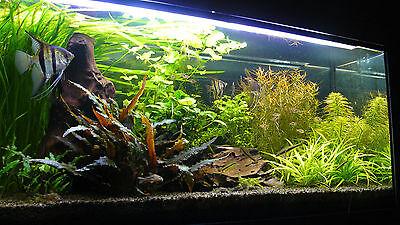 25 Kg Natural Black Aquarium Substrate Sand Ideal For Plants Aquascaping Iwagumi 6