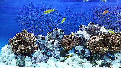 20 Kg Mixed Set Of Stones For Malawi Cichlid Tanganyika Aquarium Ocean Rock 3