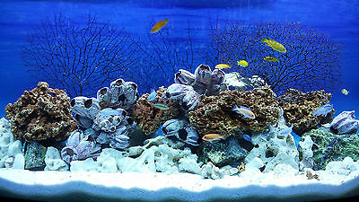 20 Kg Mixed Set Of Stones For Malawi Cichlid Tanganyika Aquarium Ocean Rock 6